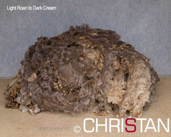 Christan-Farm-Corriedale-16-light-Roan-to-Dark-Cream-approx-90mm-(2)