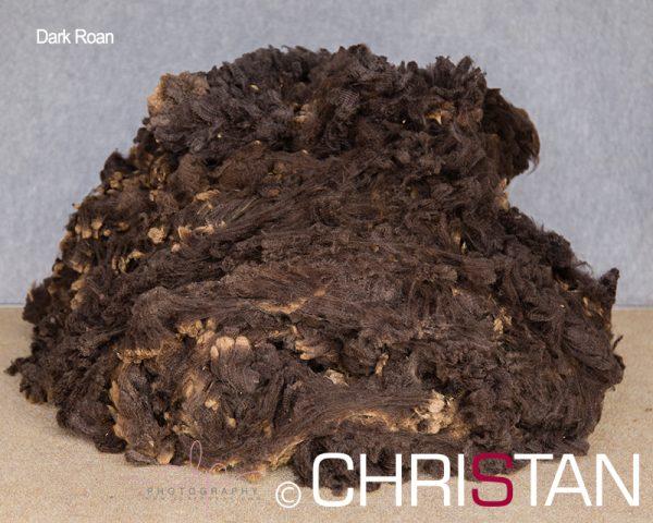 Christan-Farm-Corriedale-5-Dark-Roan-100mm