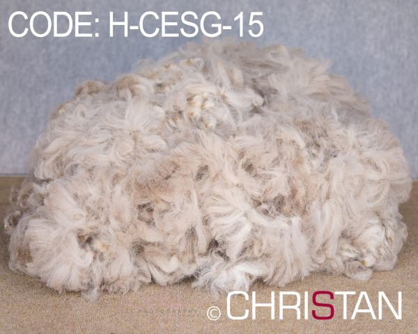 Christan-Farm-Alpaca-Huacaya---Christan-EvenSong-15